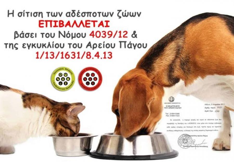 Απολογισμός Δήμου Ανατολικής Σάμου για τα αδέσποτα ζώα